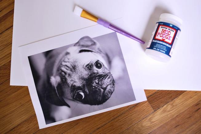 Foto del cane posata su un tavolo