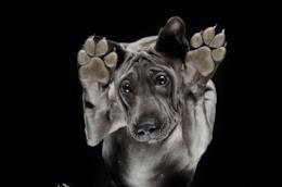 Un cane nero fotografato dal basso dal fotografo Andrius Burba