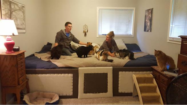 I sette animali e i padroni sul mega letto