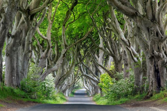 Dark Hedges nel County Antrim, uno dei viali alberati più belli al mondo