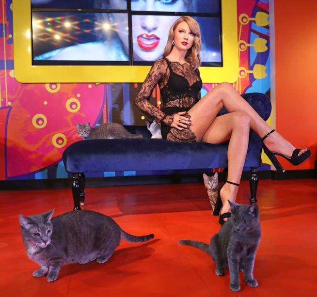 La statua di cera du Taylor Swift circondata di gatti al Madame Tussauds