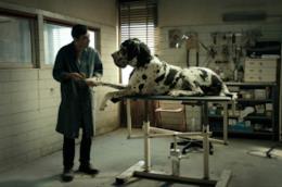 Una immagine tratta da Dogman, il film di Matteo Garrone