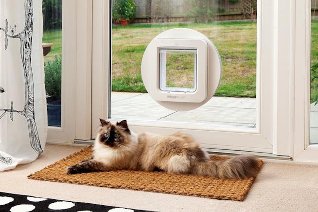 L'immagine di un gatto disteso davanti a una porta a vetri