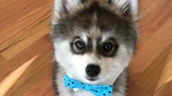 Norman, il cucciolo di iomsky