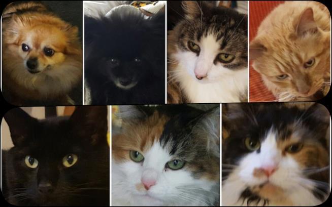 I 7 animali domestici della coppia