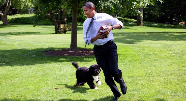 Il Presidente Barack Obama gioca con il cane Bo