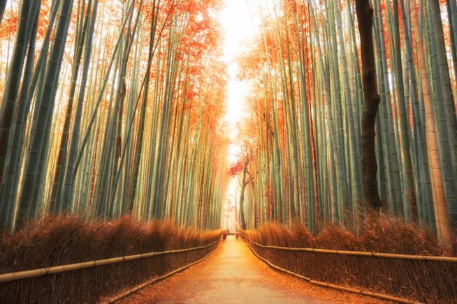 Strada tra le canne di bambù