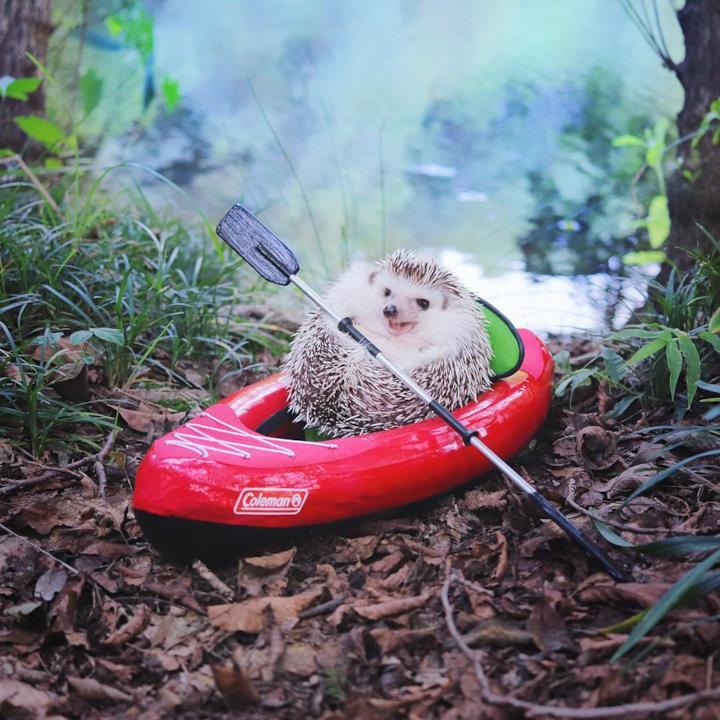 Il riccio Azuki in kayak