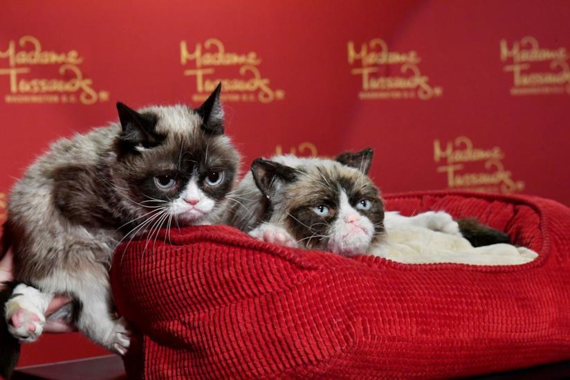 Grumpy Cat è diventata anche una statua di cera