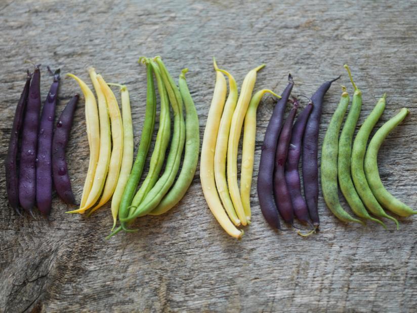 Baccelli colorati di legumi