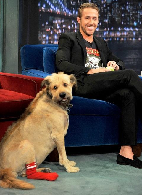 Ryan Gosling ospite di Jimmy Fallon con il suo cane George