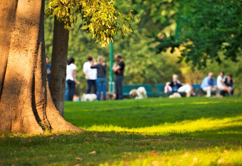 Delle persone in un parco ombroso