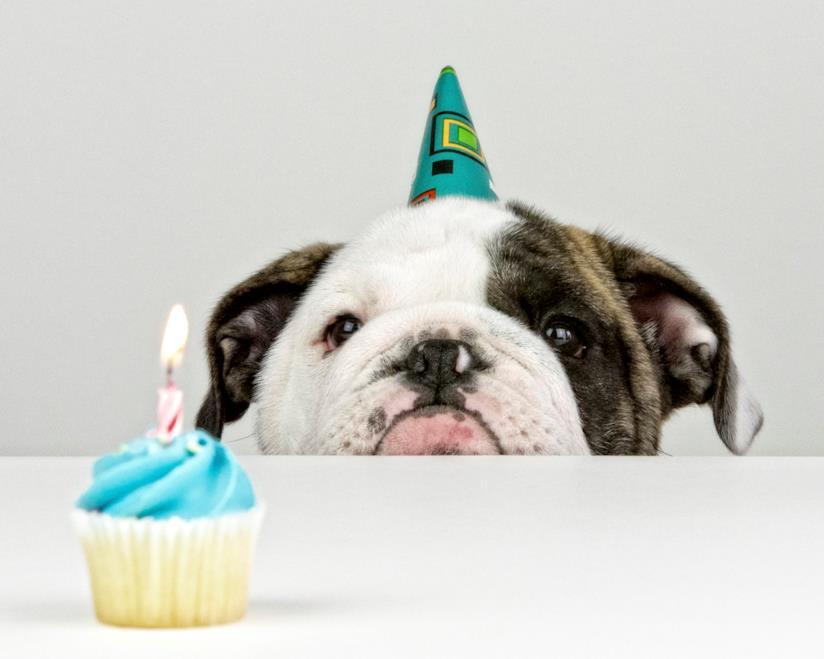 Cane che festeggia