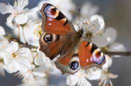 Una farfalla posata su fiori bianchi