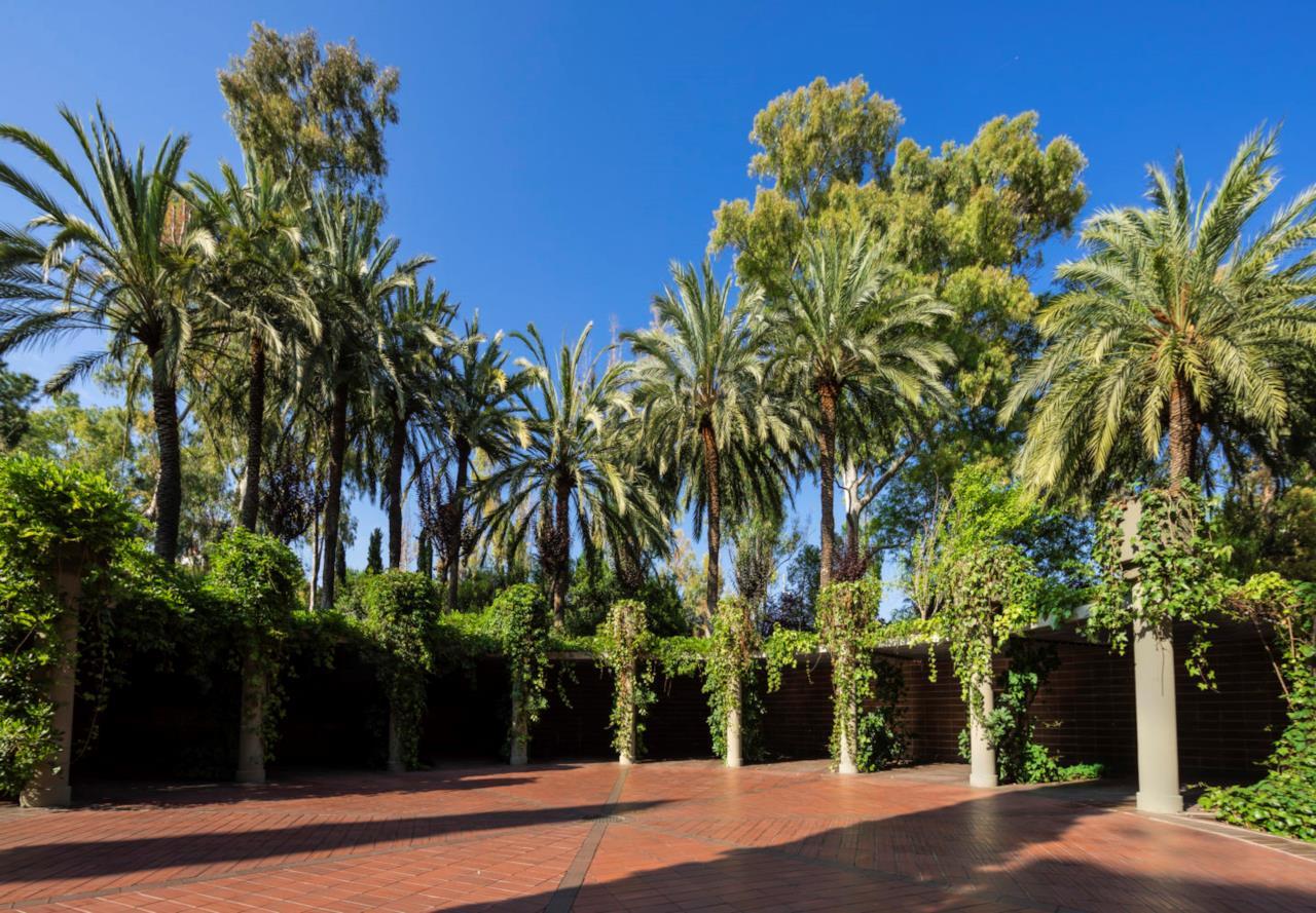 Palme e rampicanti delineano un giardino