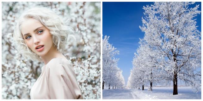 Capelli biondi e Silver in un collage con alberi invernali