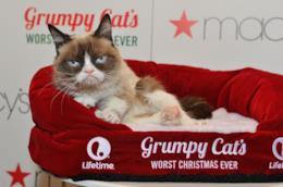 La regina dei cat meme è mancata a 7 anni