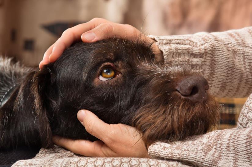 Gli occhi imploranti di un cane
