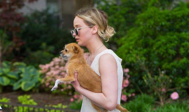 Jennifer Lawrence con il suo cane
