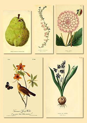 Adesivo da Parete Stampa Botanica