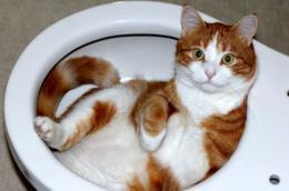 Un gatto adagiato in un WC