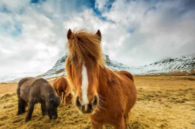 Il Trono di Spade: tour self drive in Islanda nelle location della serie