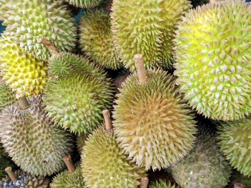 Esposizione di Durian