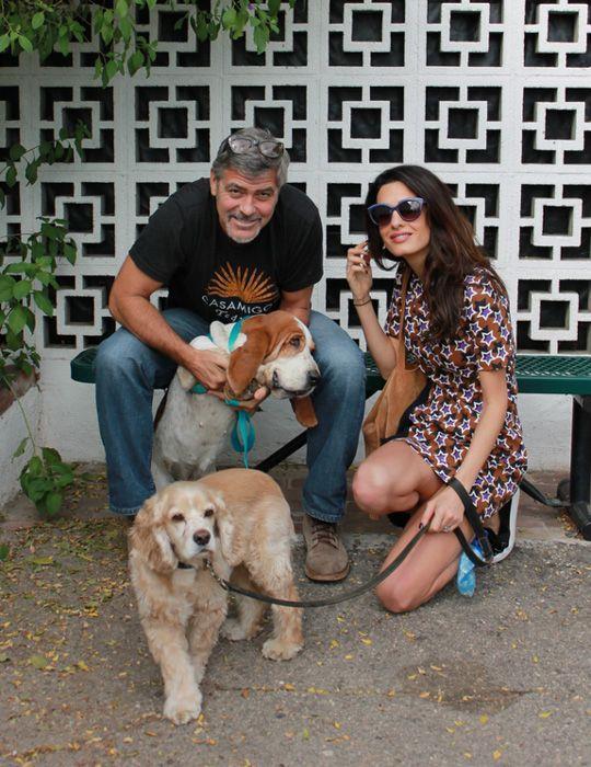 La cagnolina Millie, l'ultima arrivata a casa Clooney