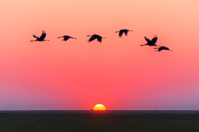 Papere volano al tramonto