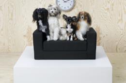 """Il logo IKEA e la scritta """"per gatti e cani"""""""
