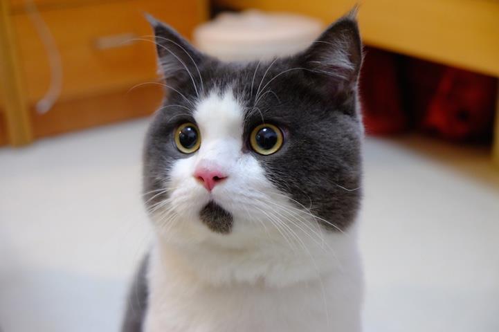 Una foto del gatto Banye
