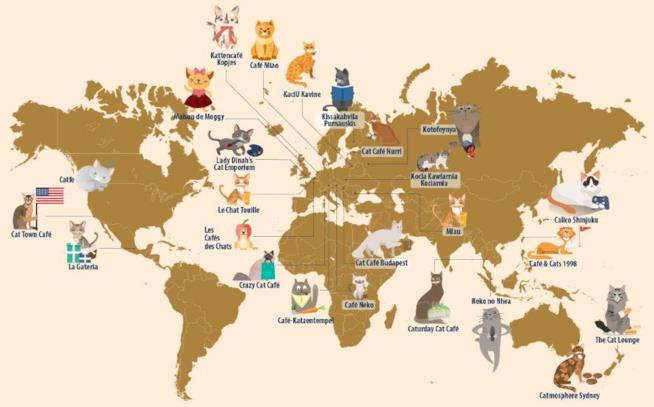 I 25 migliori cat cafes del mondo