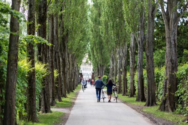 Assistens: il cimitero-parco di Copenhagen
