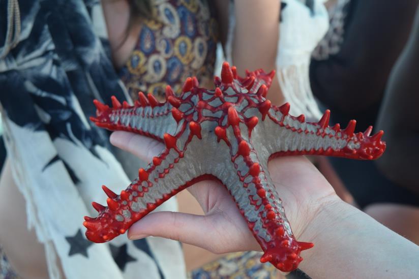 Una grande stella marina
