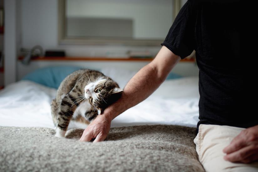 Un gatto che cerca le coccole
