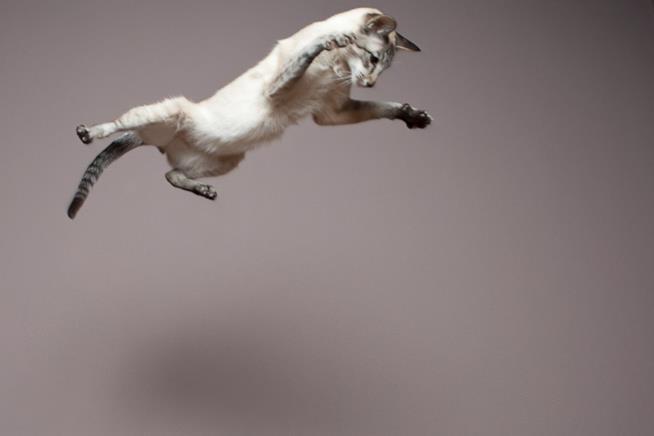 Un gatto che salta in aria