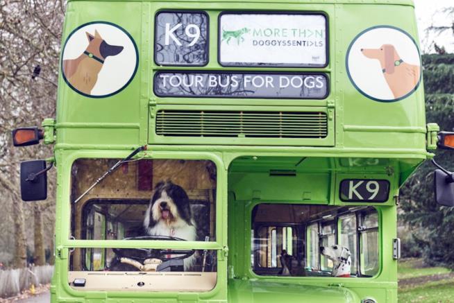 Alcuni cani a bordo del primo bus a loro dedicato