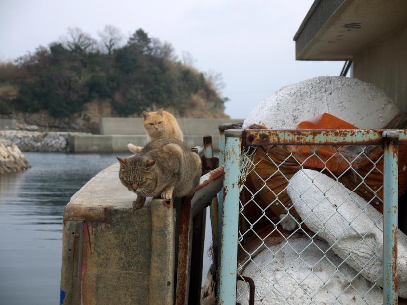 Due gatti aspettano i pescatori dell'isola per ricevere in premio del pesce