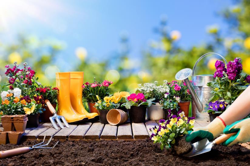 piante e utensili da giardino