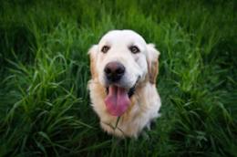 migliori pipette antiparassitarie per il tuo cane