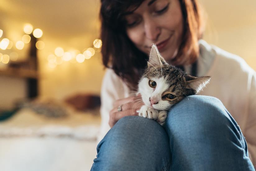 Ragazza coccola il gatto tenendolo sulle sue gambe
