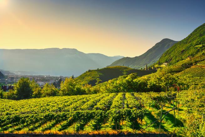 Strada del vino del Trentino