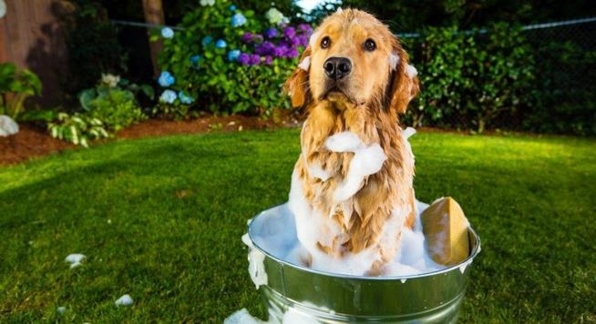 Un cucciolo di cane insaponato pronto per il bagno