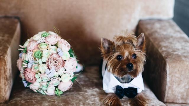 Cani ai matrimoni: i nostri consigli per farli partecipare alle nozze