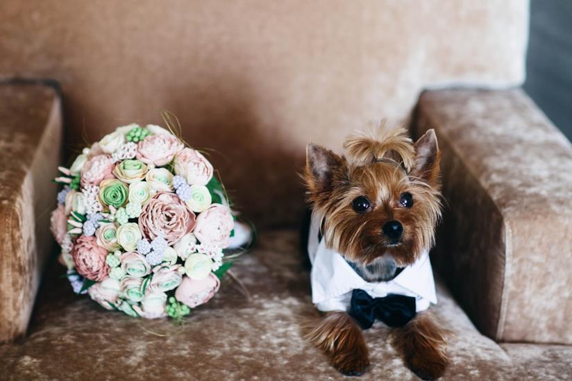 Cane seduto su una poltrona vicino al bouquet di nozze