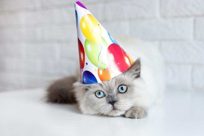 Gatto con cappellino da compleanno