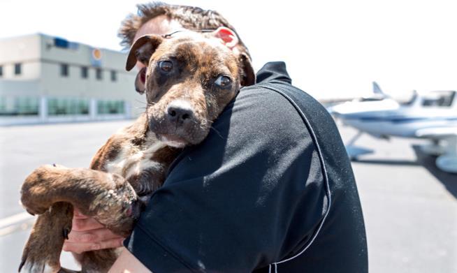 Paul Steklenski abbraccia un cane