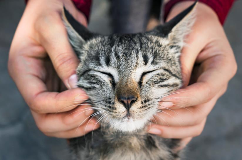 una donna accarezza un gatto