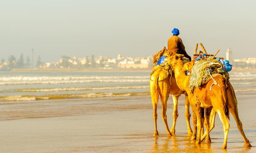 Spiaggia di Essaouira con dromedari