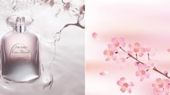 Ever Bloom Sakura Art Edition l'eau de parfum di Shiseido con ciclamino e fiori di ciliegio